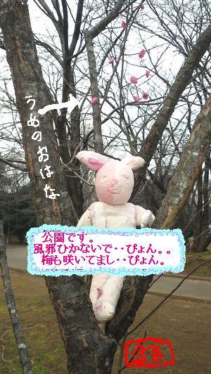 sokうさぎ こうえん0-1IMGP0050D.JPG