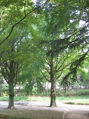 sokIMG_4723 公園 1.jpg